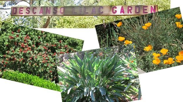 Descanso-Gardens