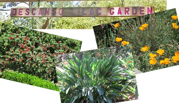 Descanso Gardens In La