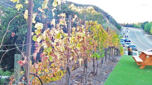 Malibu-Wines